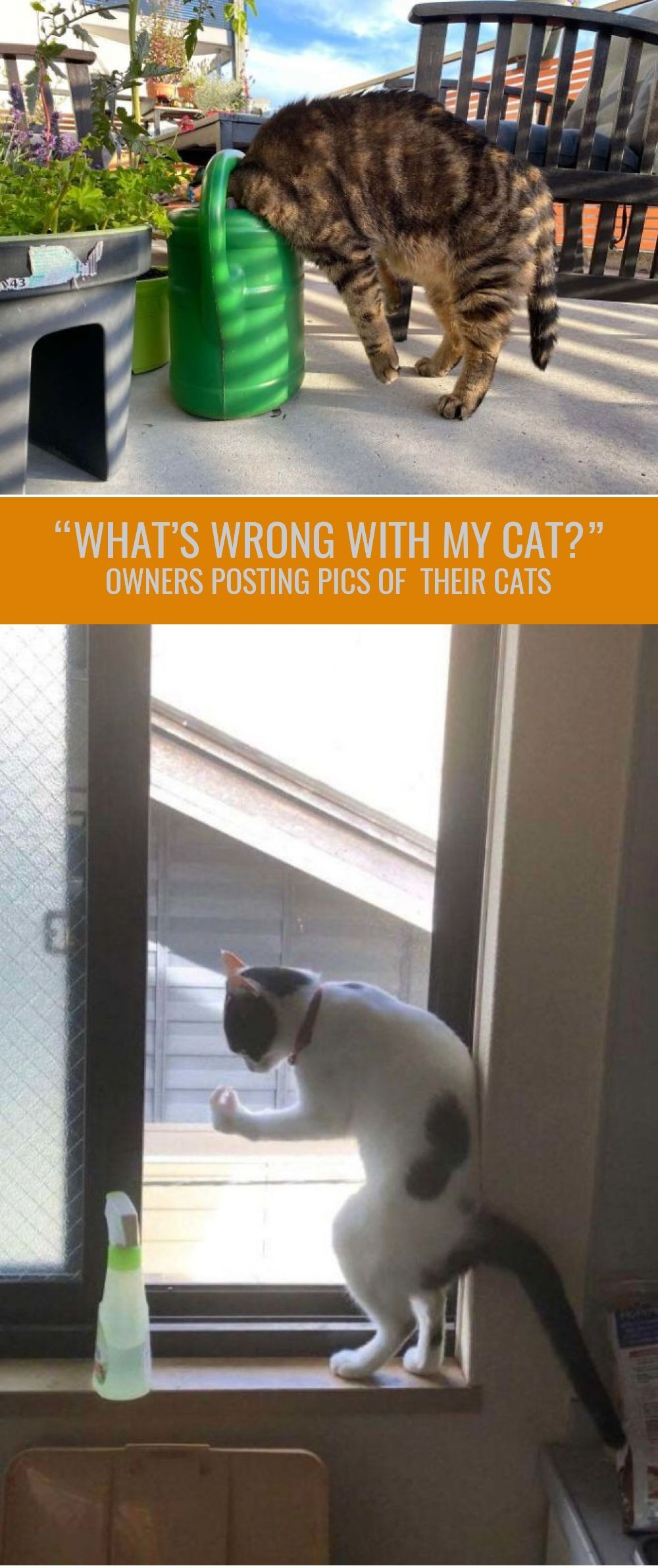 What S Wrong With My Cat Online Group Has Owners Posting Pics Of Their Malfunctioning Cats And Here Are 30 Of The Funniest Ones Cats In 2020 Cats Cat Online Pics