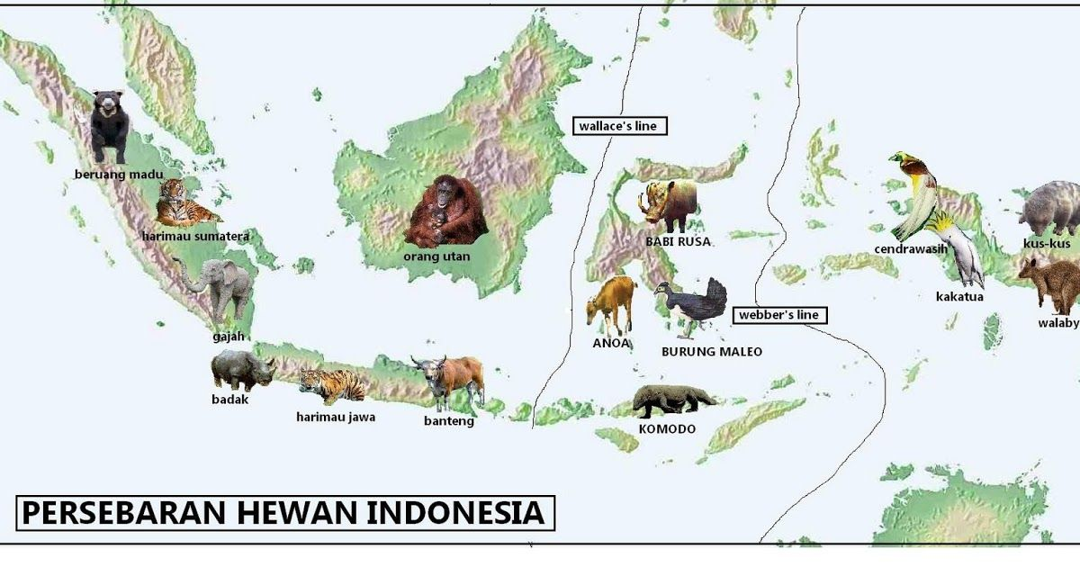 Unduh 48 Koleksi Gambar Flora Fauna Indonesia Paling Baru HD