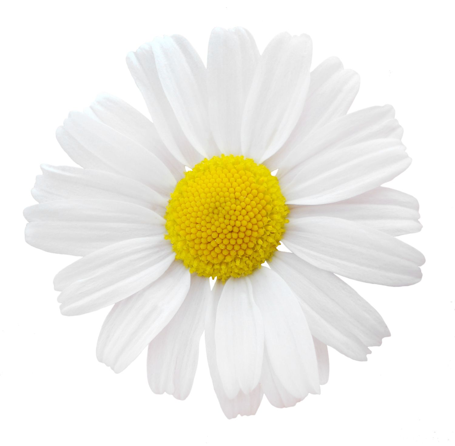 Wedding Flowers Meaning: Daisy. BIRTHDAY MONTH: April. COLORS