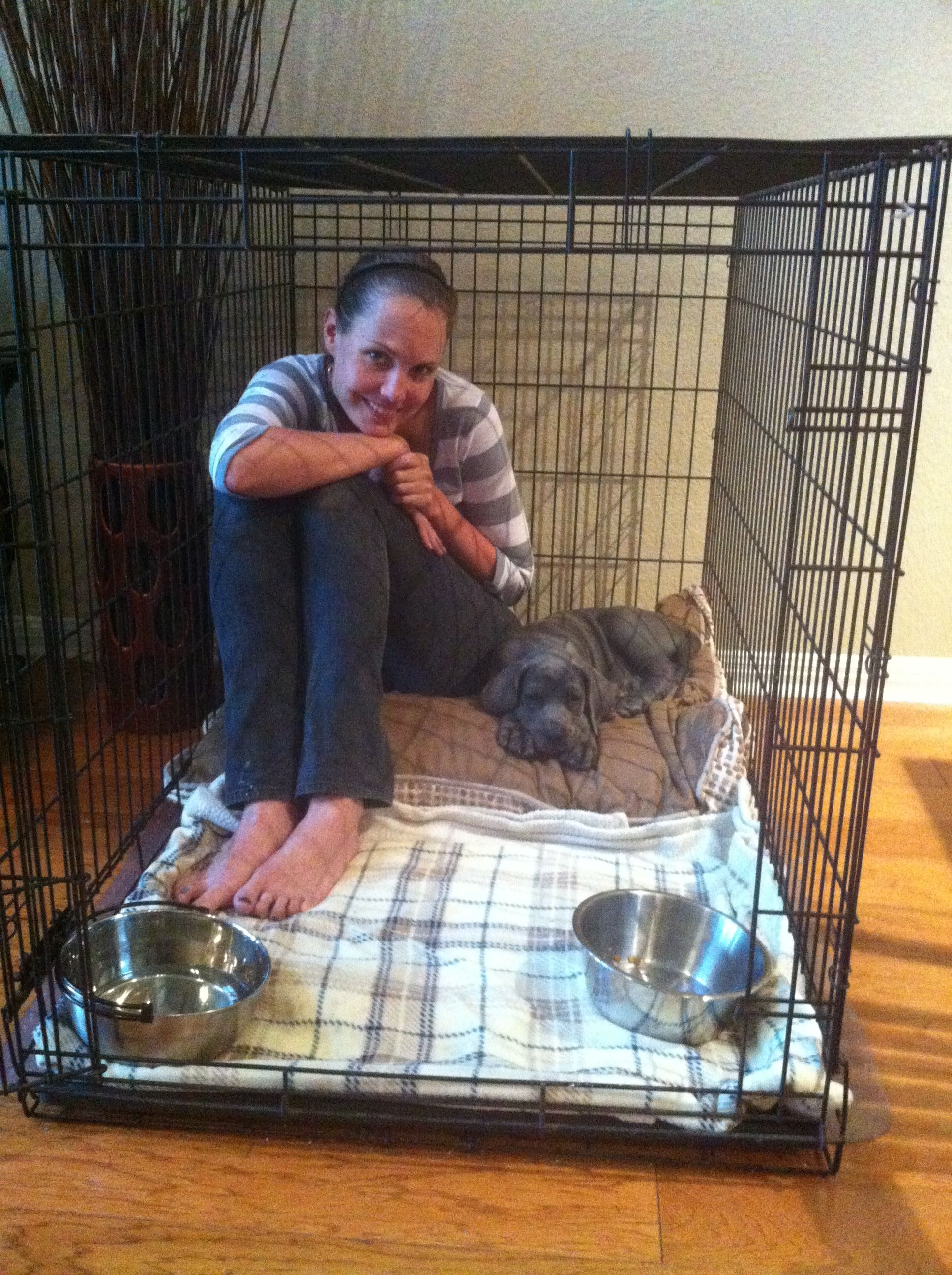 Lenneke Nieuwland Is Crate Training Her Great Dane Puppy Oakley