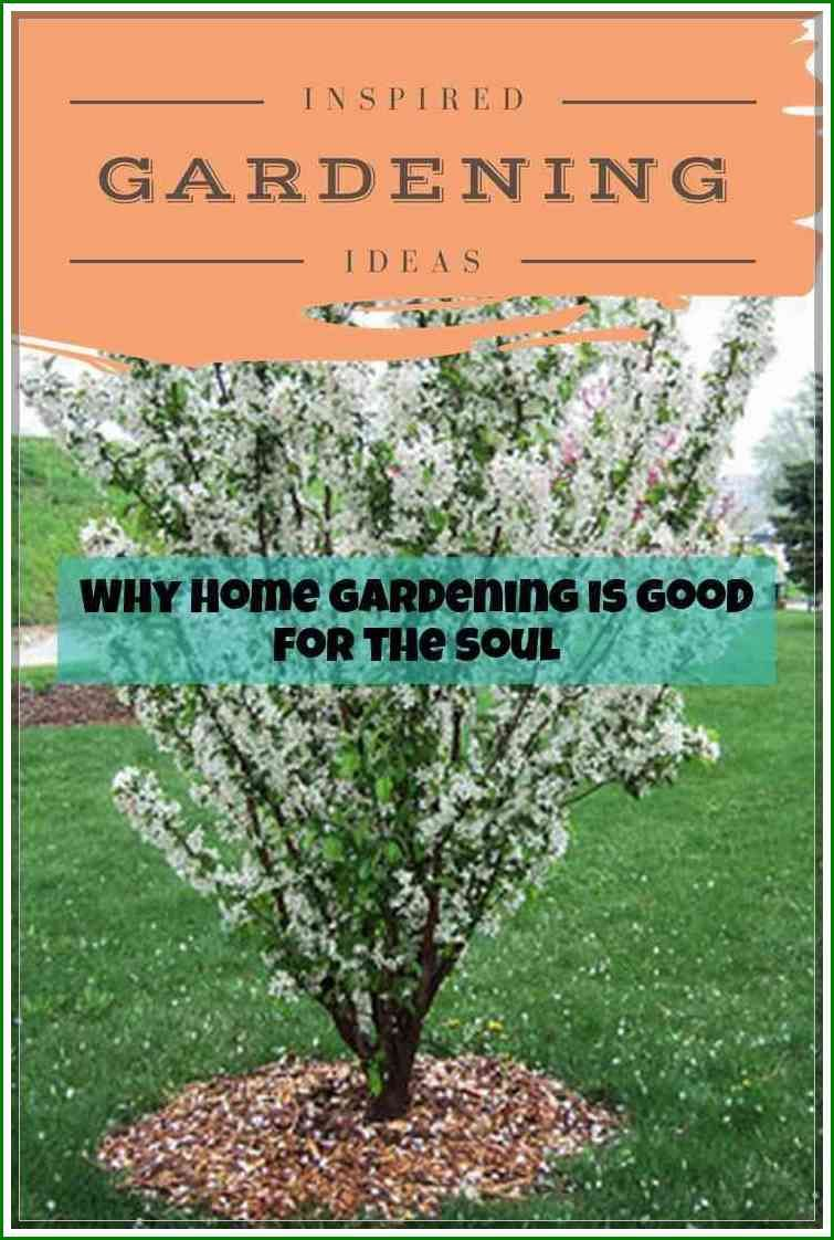 86abaf668a3e2bab0228ec572ee92282 - What Are The Basic Gardening Techniques