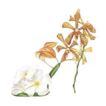 Pin de mendez marguerite em peinture sur porcelaine | Pinterest