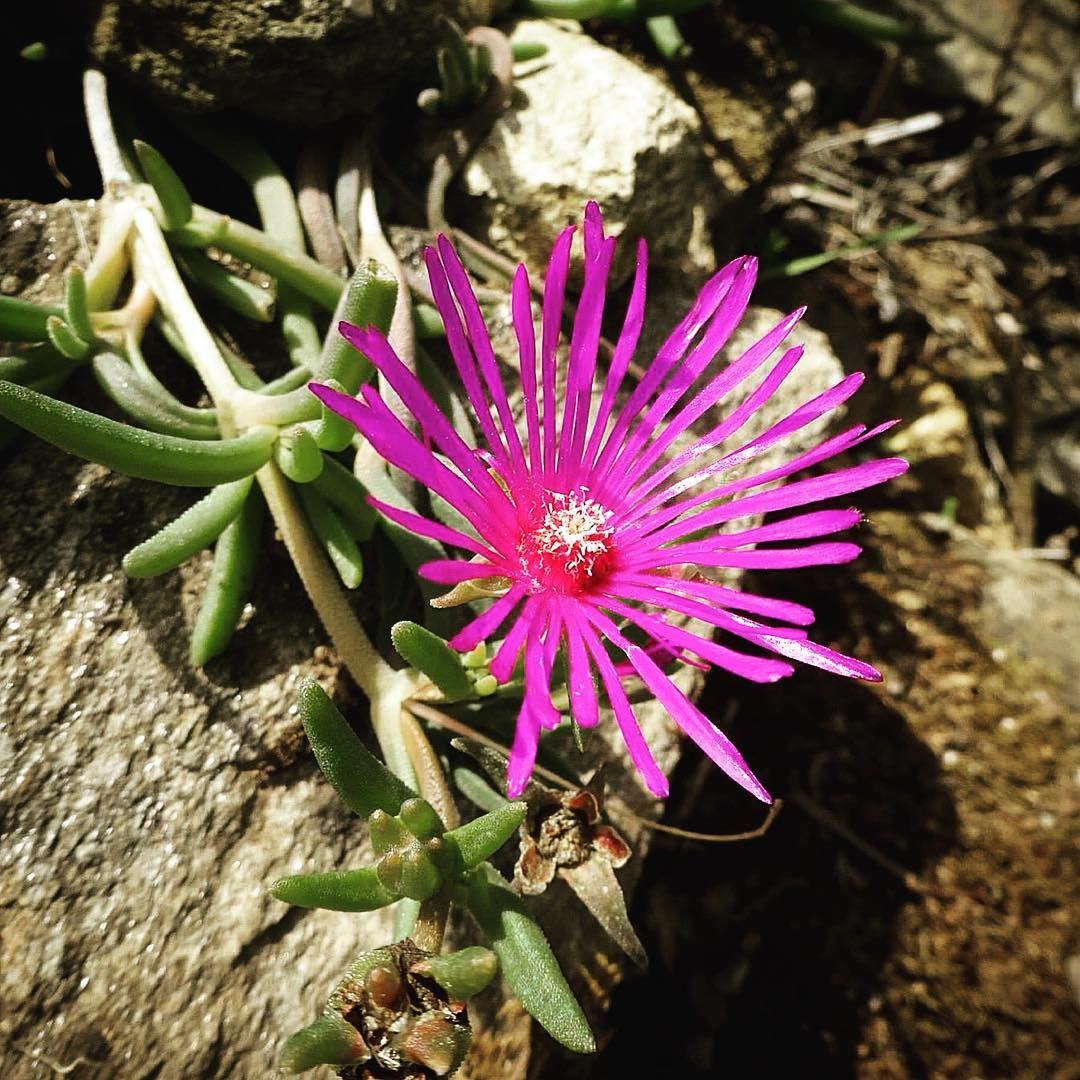 #fleur #flower