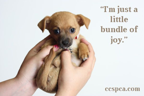 Cute Puppy Caption I M Just A Little Bundle Of Joy Cute Puppies Puppy Pictures Puppies