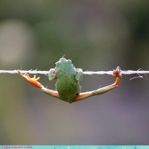 Acting Like Animals: Hanging by a Thread https://goo.gl/Vf2Hv3