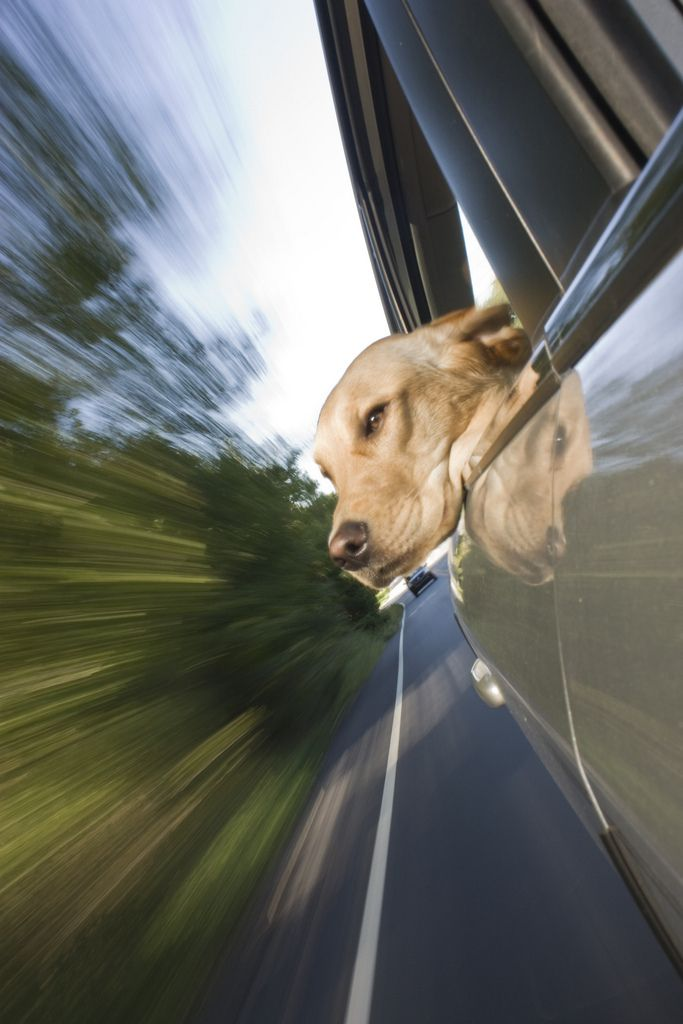 26 Photos That Prove Dogs LOVE Car Rides… This Is Wonderful. - http://www.lifebuzz.com/dogs-enjoy-ride/