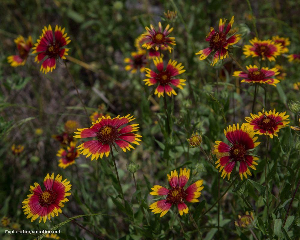 Brilliant color at the Lady Bird Johnson Wildflower Center, Austin ...