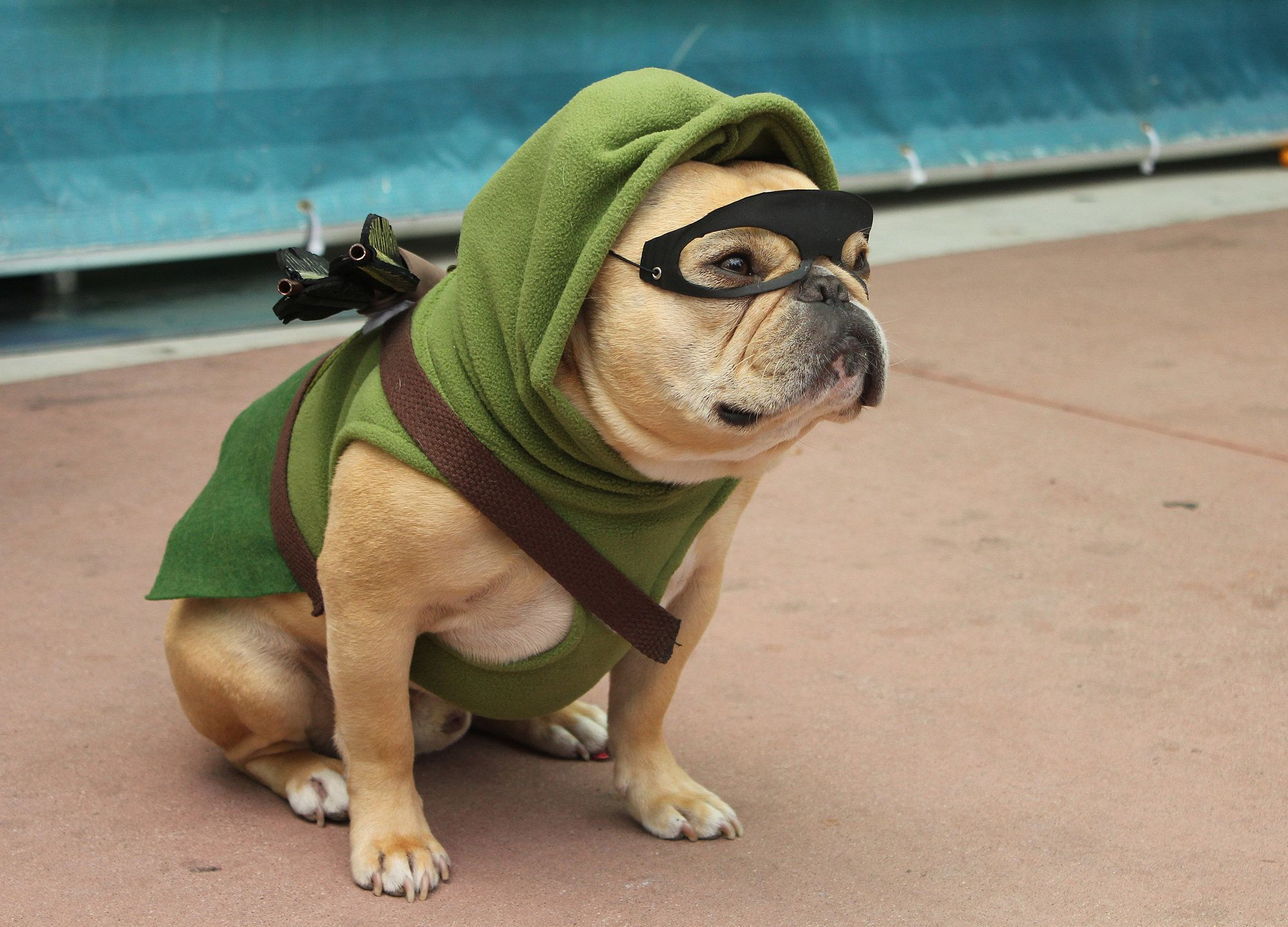 Image result for green arrow dog
