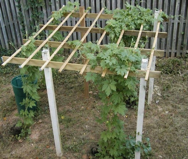 Exceptional Cucumber Trellis Ideas Part - 1: Bean Trellis · Cucumbers-Trellises-Ideas