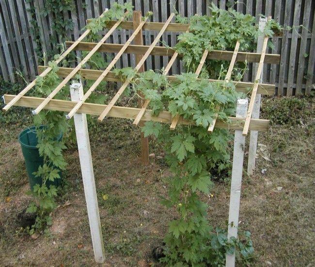 Building trellises for cucumbers enhances growth for Vegetable garden trellis designs