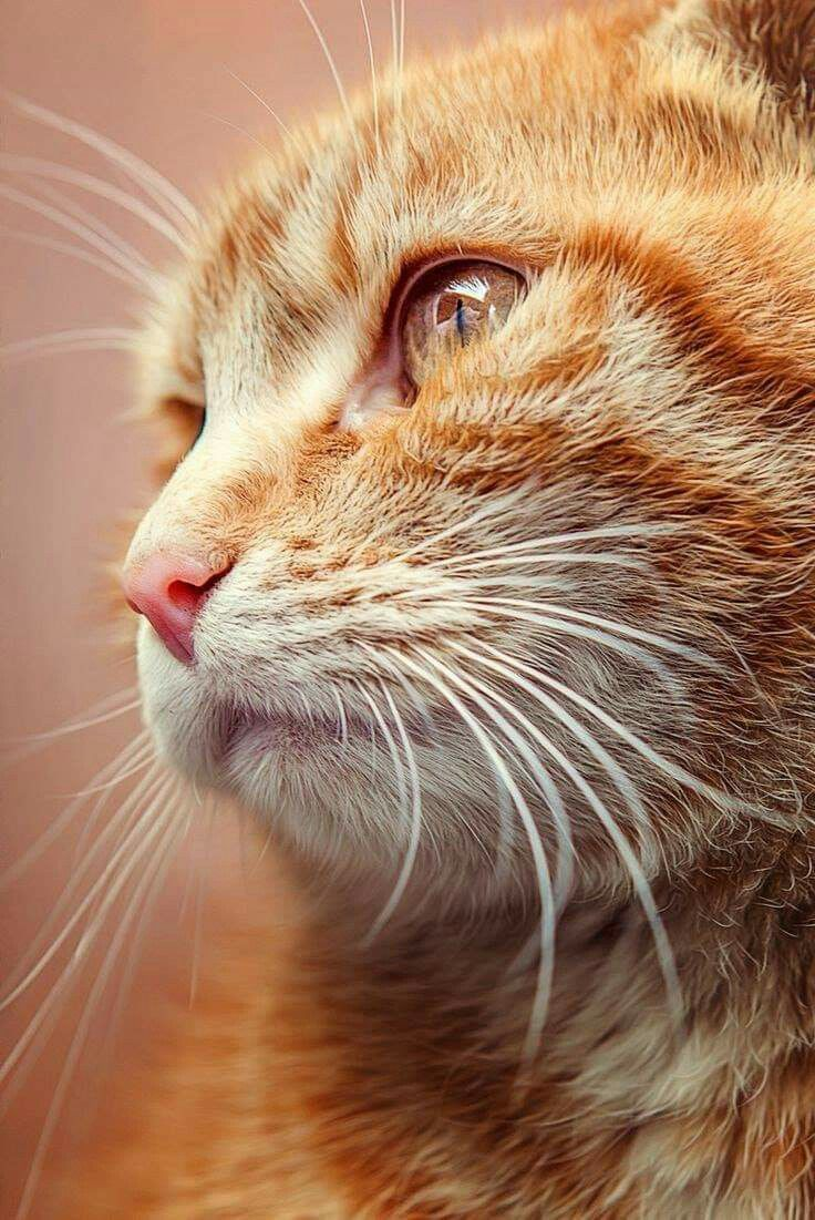 Pin by FloydAngela Gamboa on cat photos 2 in 2020 Cat