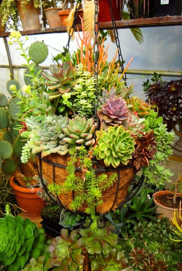 Beautiful Succulent Basket At Solar Gardens Planting Succulents Succulents Hanging Plants Outdoor
