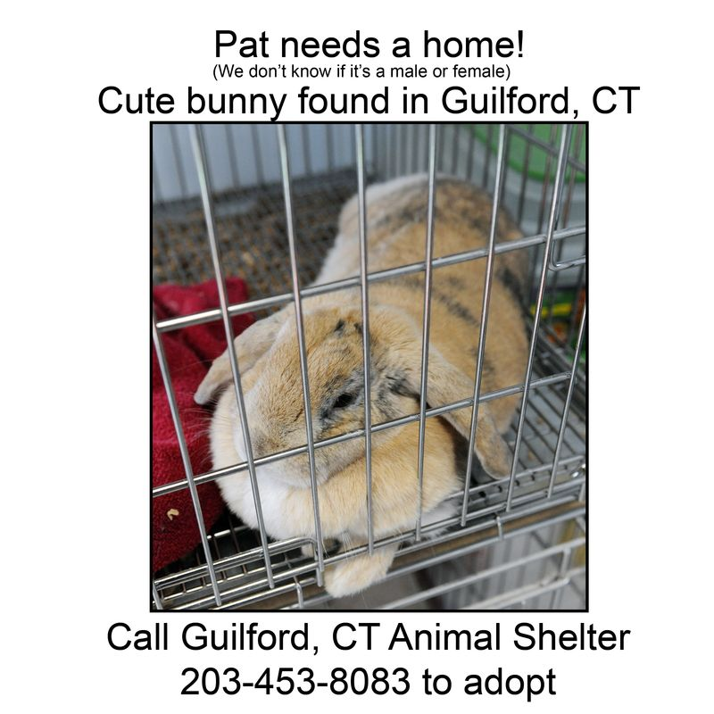 Adopt Pat On Petfinder Animal Shelter Mini Lop Adoption