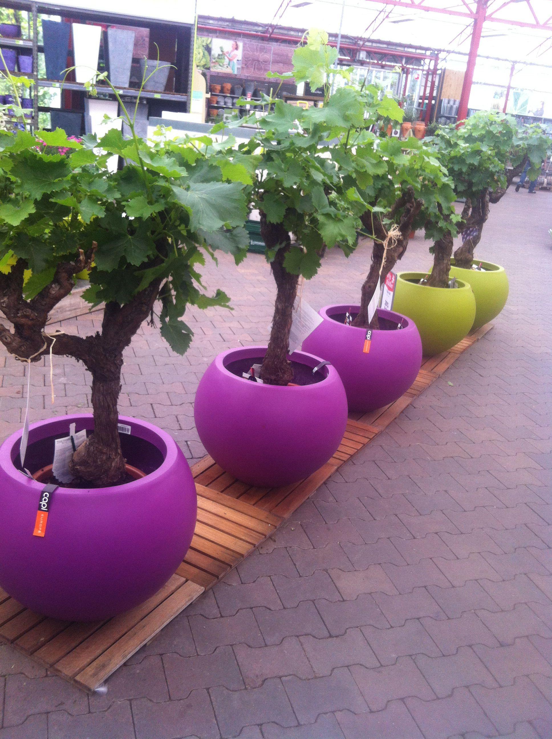 Boom In Pot Tuin.Boom In Een Pot Tuin In 2019 Tuin Ideeen Tuin En Een Pot