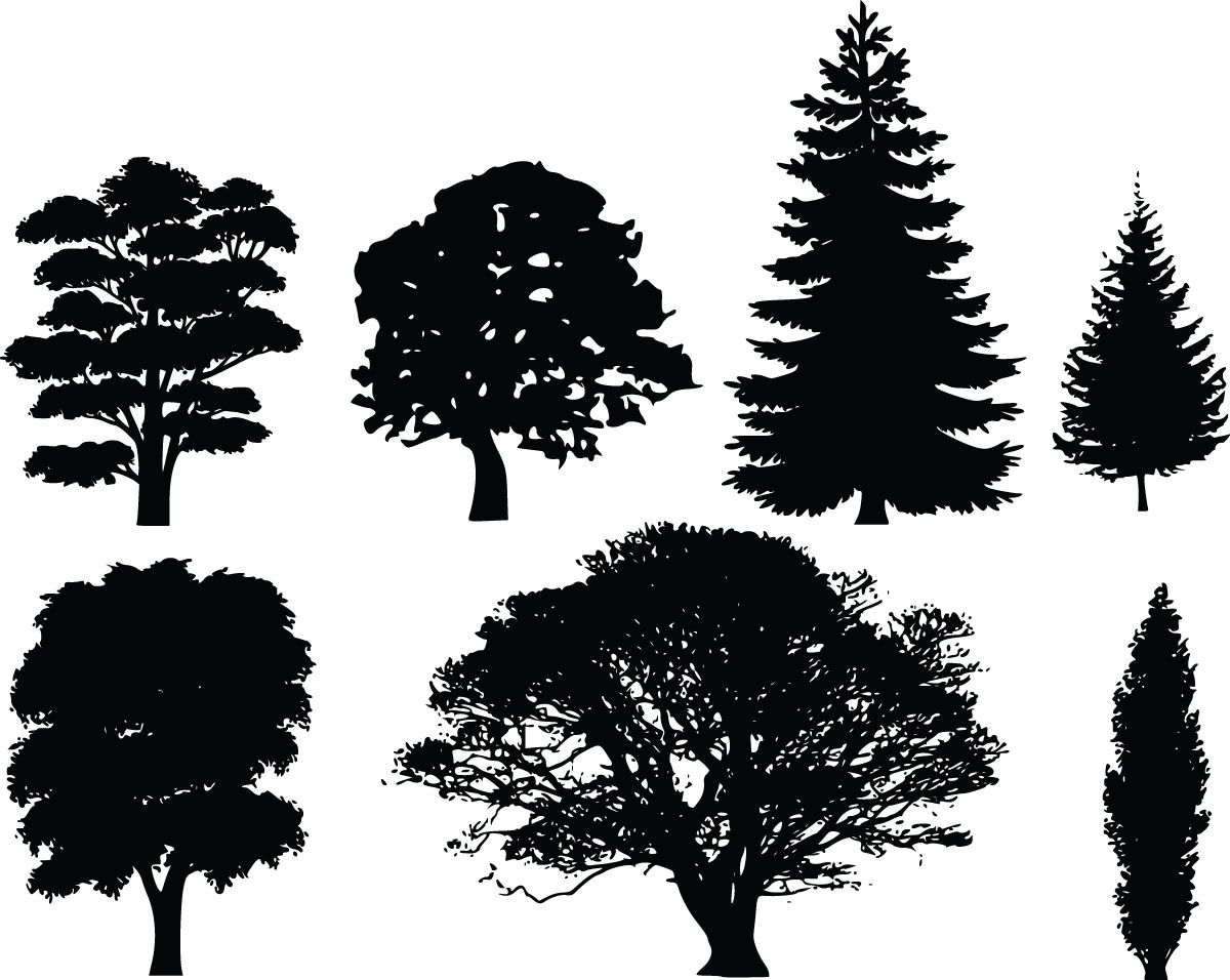 Tree Silhouettes | ... and white tree clip art image of conifer ...