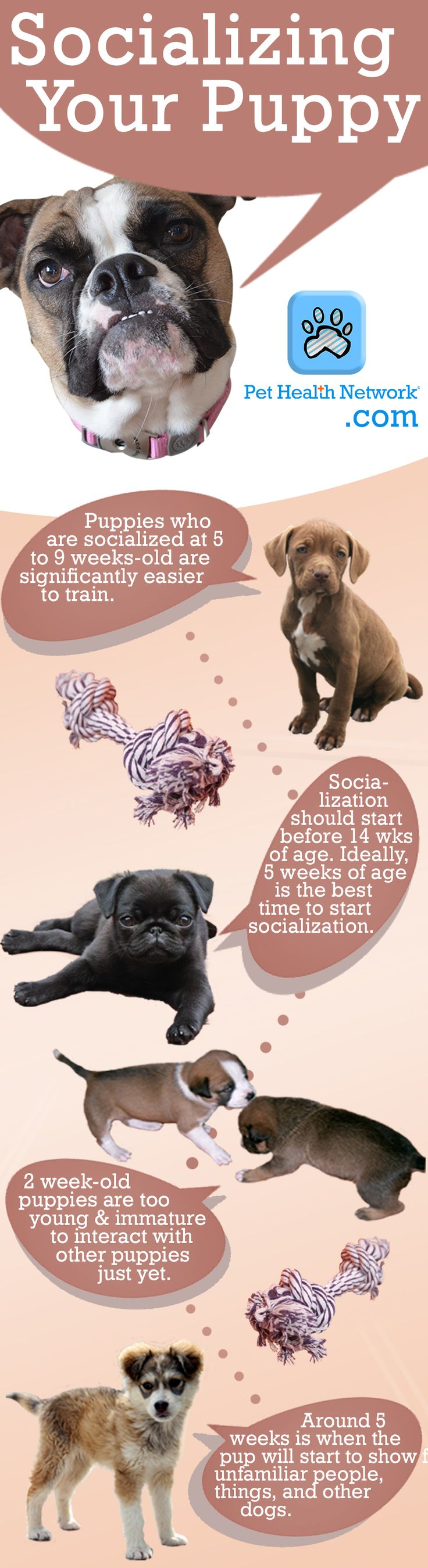 Socializing Your Pup In The Early Stages This One Is Helpful