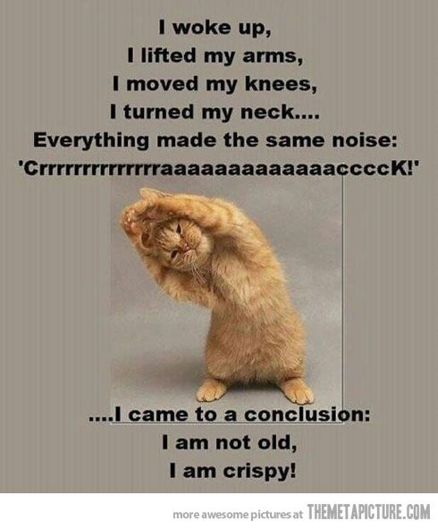 Senior Cat Quotes: Funny Quotes, Funny, Funny
