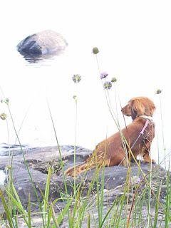 Tilkkupeitto Poppy's: koirat