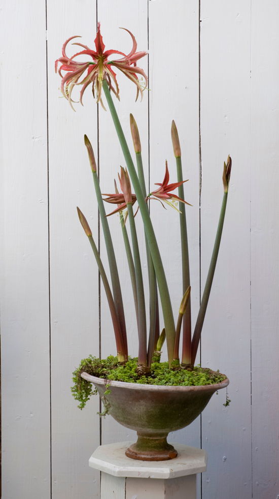 How To Force Bulbs for Gorgeous Indoor Bloom and Color | Traditional Home