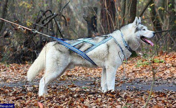 86b1686eeff5b14a47097d7402df2578 x back harness, dog sledding harness, sledding collar wishlist