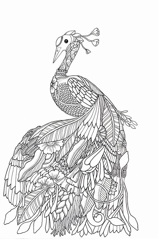 Pin de Elisabeth Quisenberry en Coloring: Peacock | Pinterest