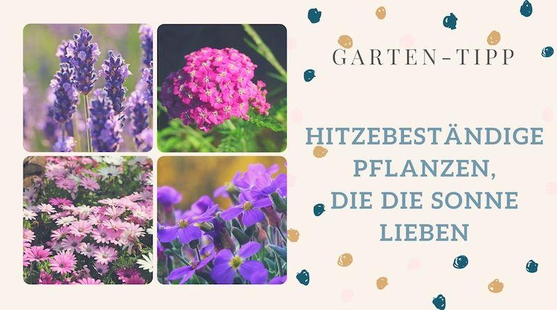 Hitzebestandige Pflanzen Die Die Sonne Lieben Blogalong De Sonnenpflanzen Pflanzen Blumen Fur Garten