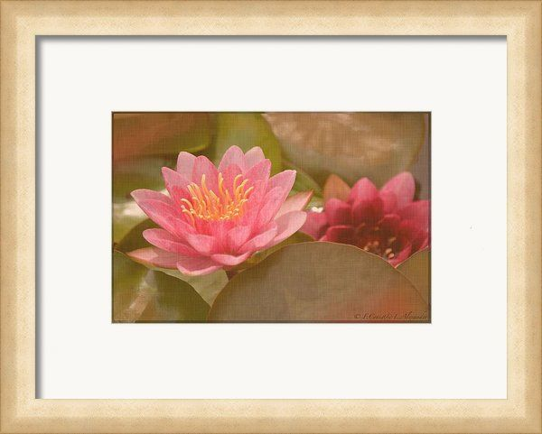Framing suggestion for Pink Water Lily Vintage Framed Print By Fiona Craig #flowers #flowerphotography #interiordecorating #decor #printsforsale #prints