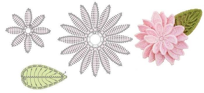 Flor e folha com gráfico