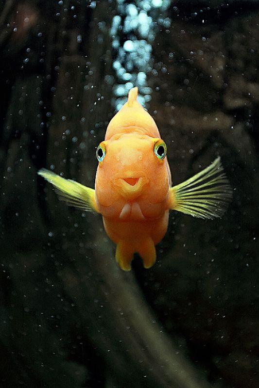 картинки рыб которые смеются икра