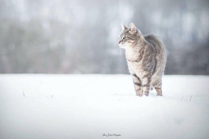 #cat #catsofinstagram #cats_of_world #cat_features #catlover #catsoftheday #caturday #catslife #catsagram #catsoftheworld #ilovemycat #catlovers #cateye #cutecat #meow  #bestmeow #excellent_cats #kitty #kittylove #kitten #dailykitten #thedailykitten #ねこ #ねこ部 #子猫 #猫の日常 #고양이 #😸 #😻 #magnificent_meowdels #bestcatsclub #pawshcatclub
