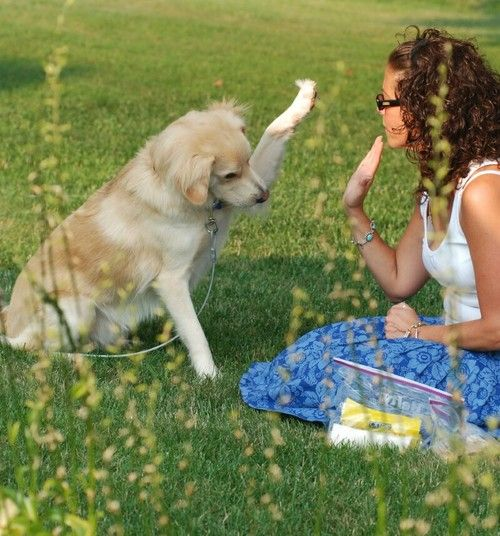 10 basic yet very usefull tips for training my dog. It's really obvious when you read them, but they're harder to think about in real life.  WORTH READING for all with dogs.