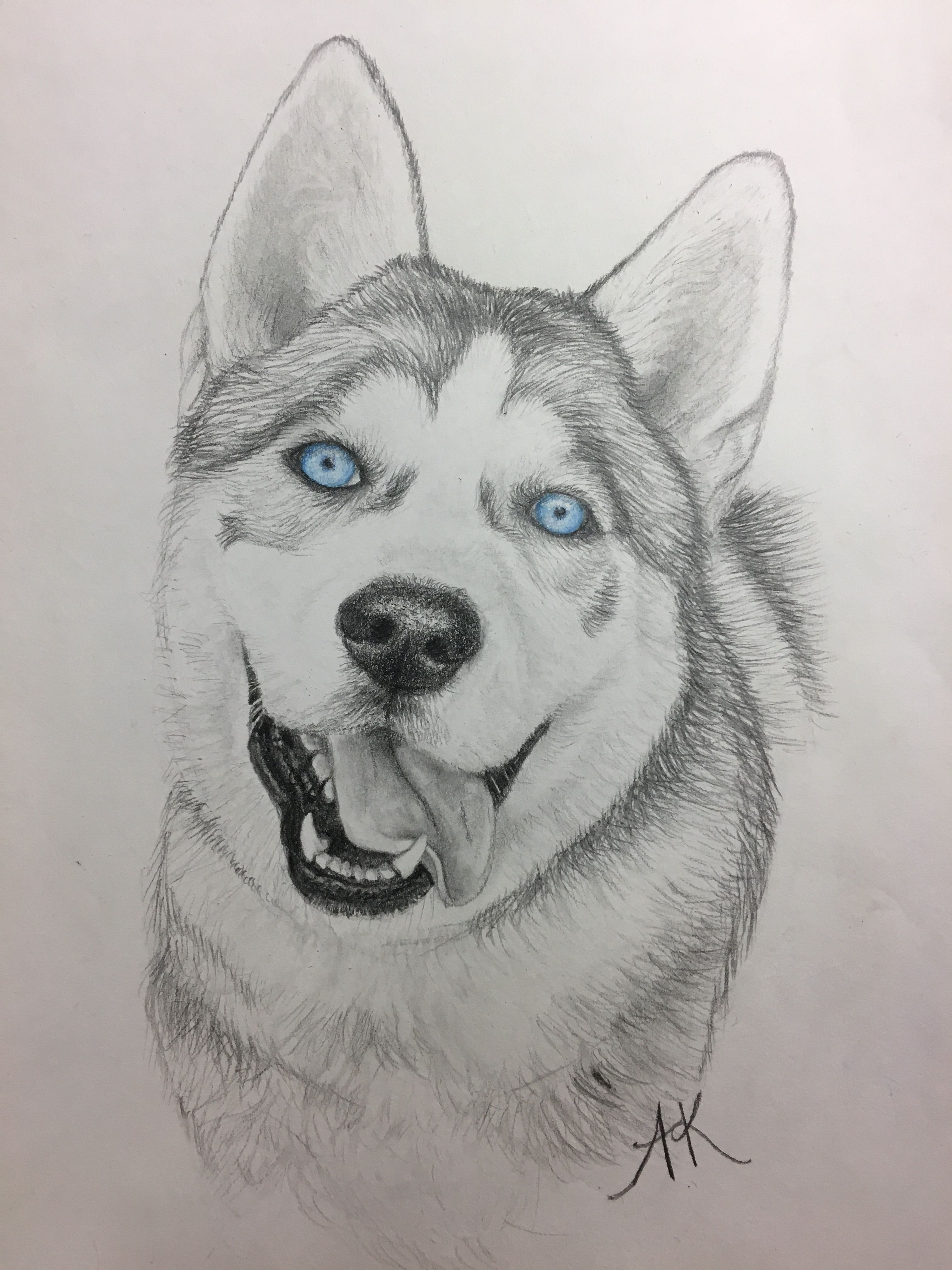 Drawing Eyes Expression Siberian Husky Drawing King With Blue