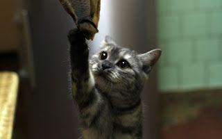 Rob Cat!