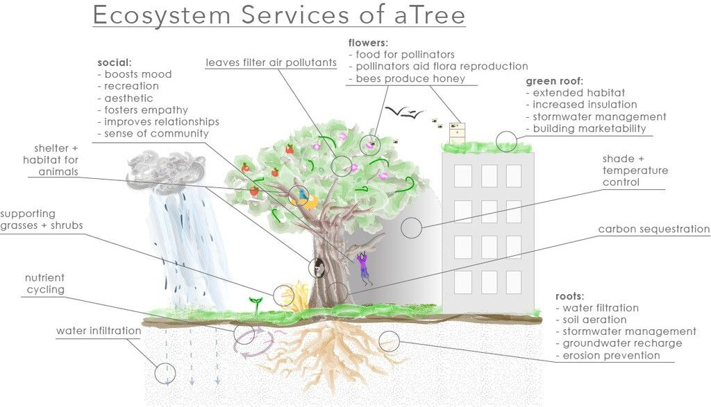 Servicing Those Ecosystems The Value Of Trees Ecosystems How