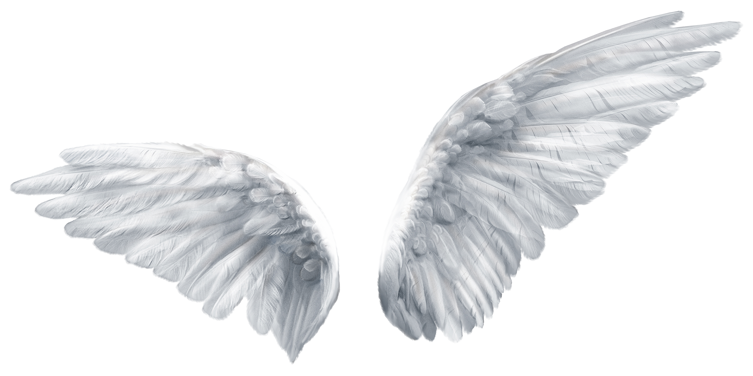 Wing Butterfly Angel Clip Art Angel Wings Png Download 3200 1600 Free Transparent Wing Png Download Clip Art L Krylya Eskizy Personazhej Domashnie Krysy