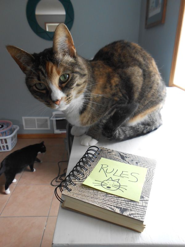 6 House Rules for Living with Me, as Defined by My Cats | Catster