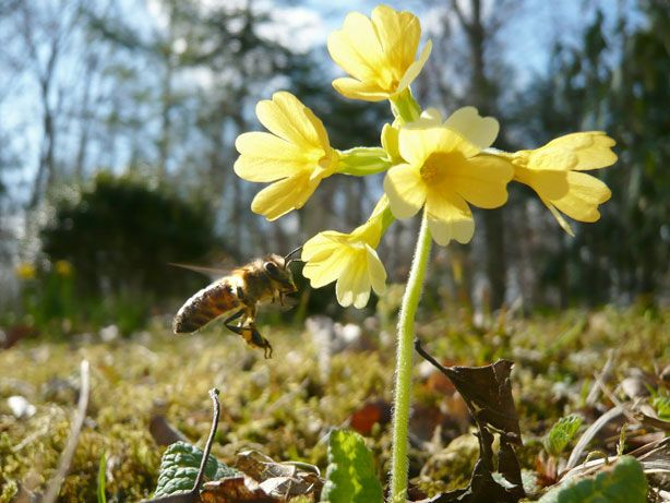 honig bienen imker - Google Search