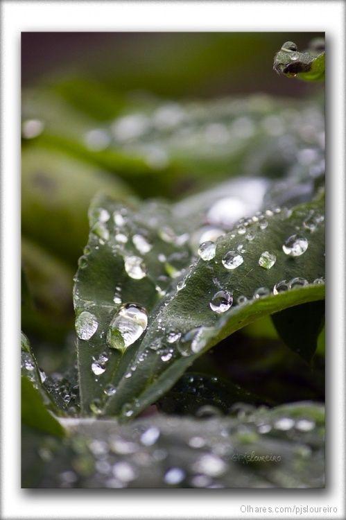 Gotas de orvalho | Fotografia de Paulo Loureiro | Olhares.com