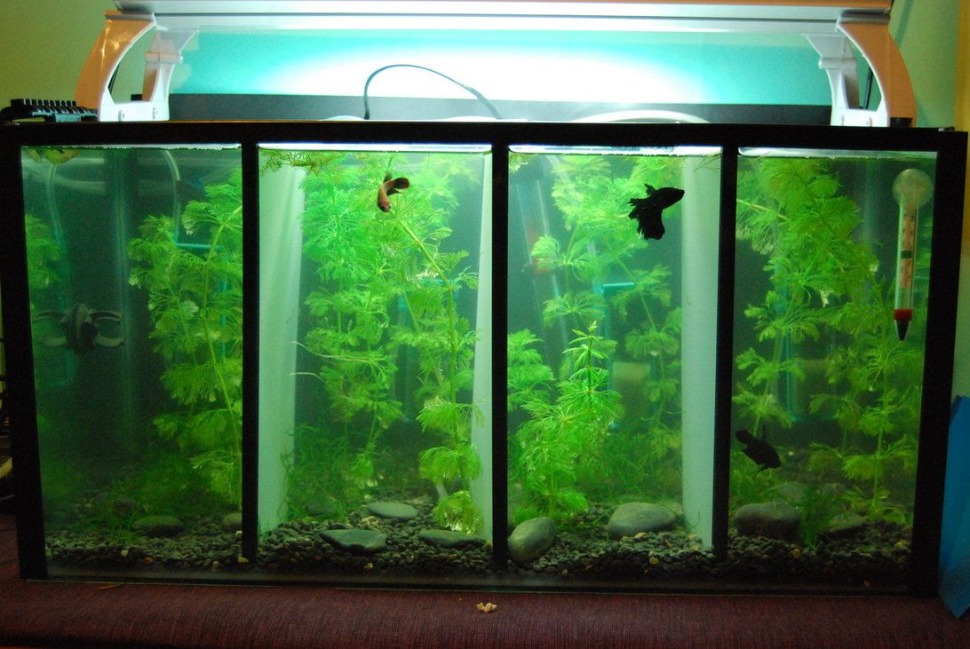 this is another betta tank divided up i 39 d love save up