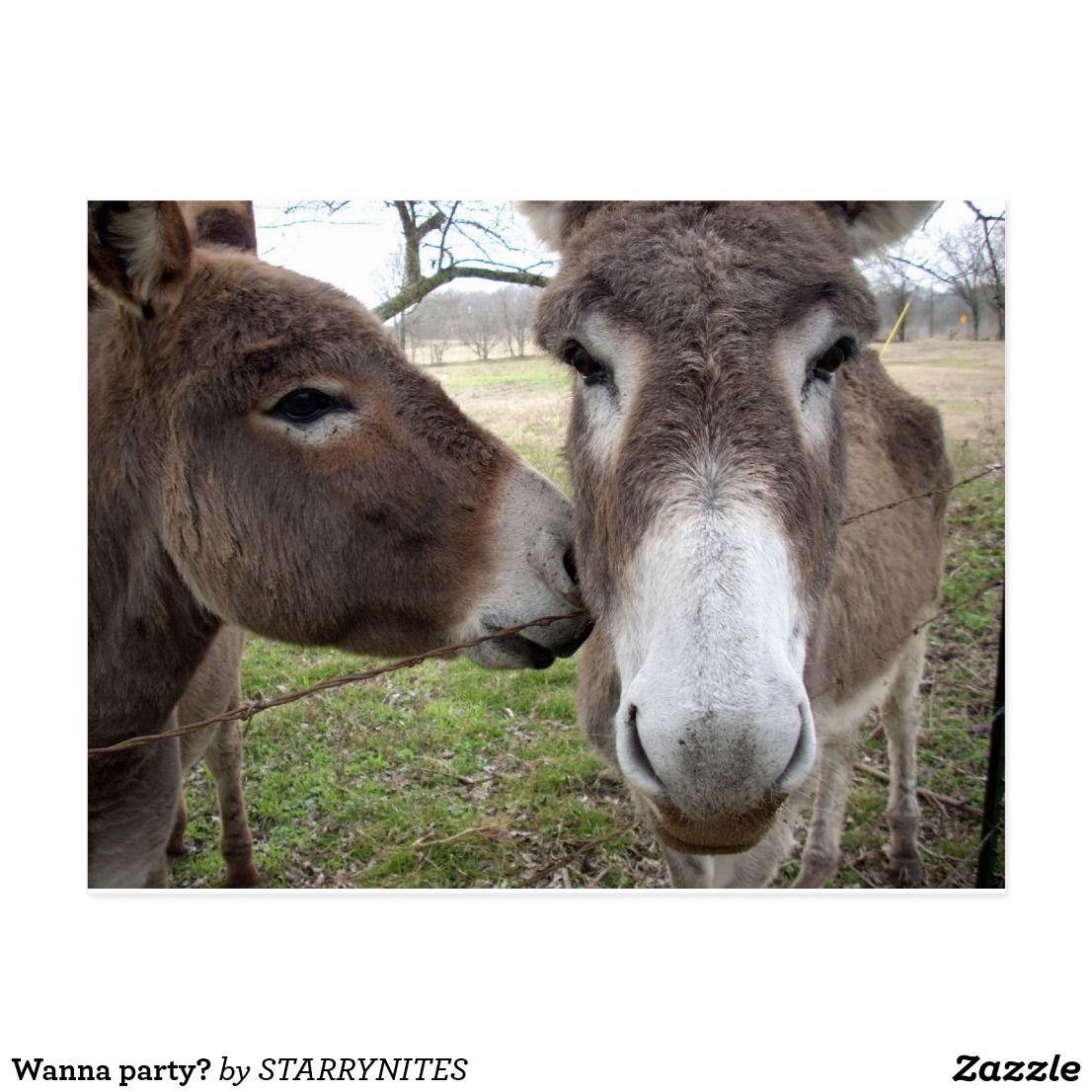 Wanna party? postcard Zazzle.co.uk Cute donkey, Love