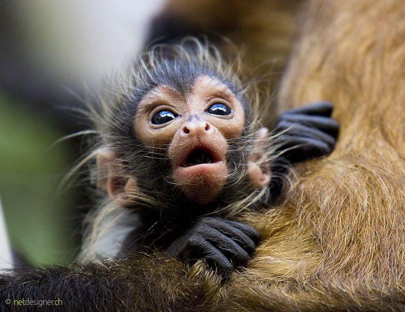 Bebé Mono Araña De Daniel Münger On 500px