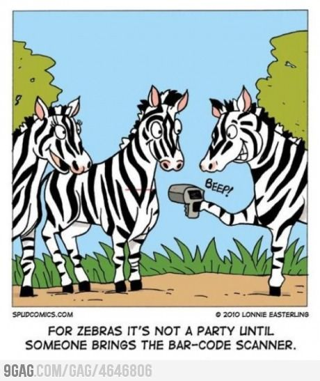 Having fun in zebra style | Books | Funny, Zebra pictures ...