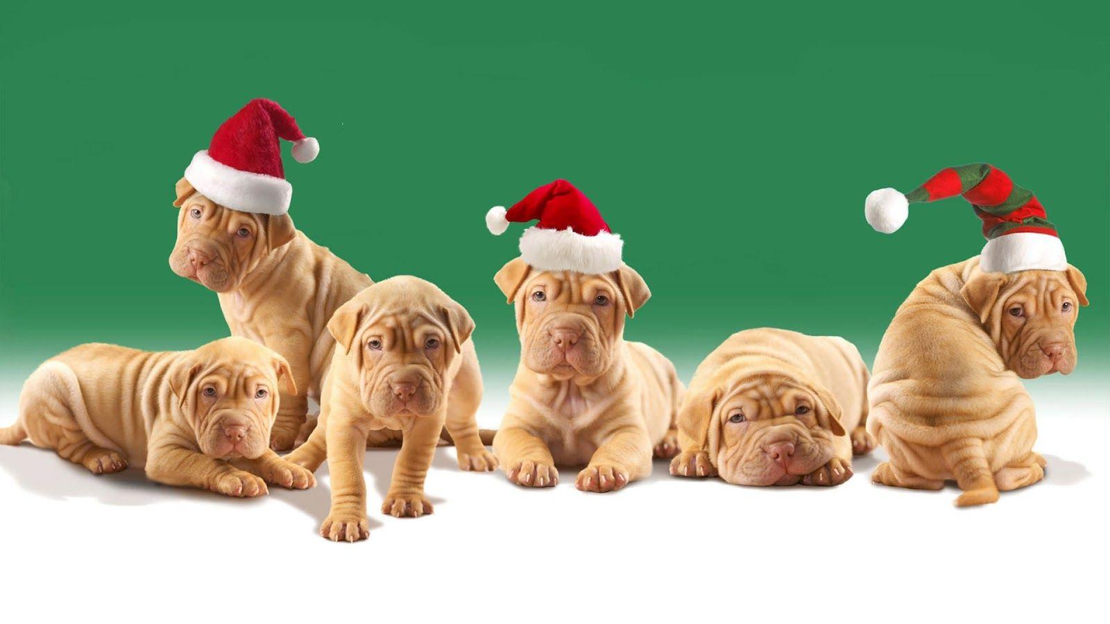 Cute Christmas Desktop Wallpaper | Cute Christmas Dog - Wallpapers ...
