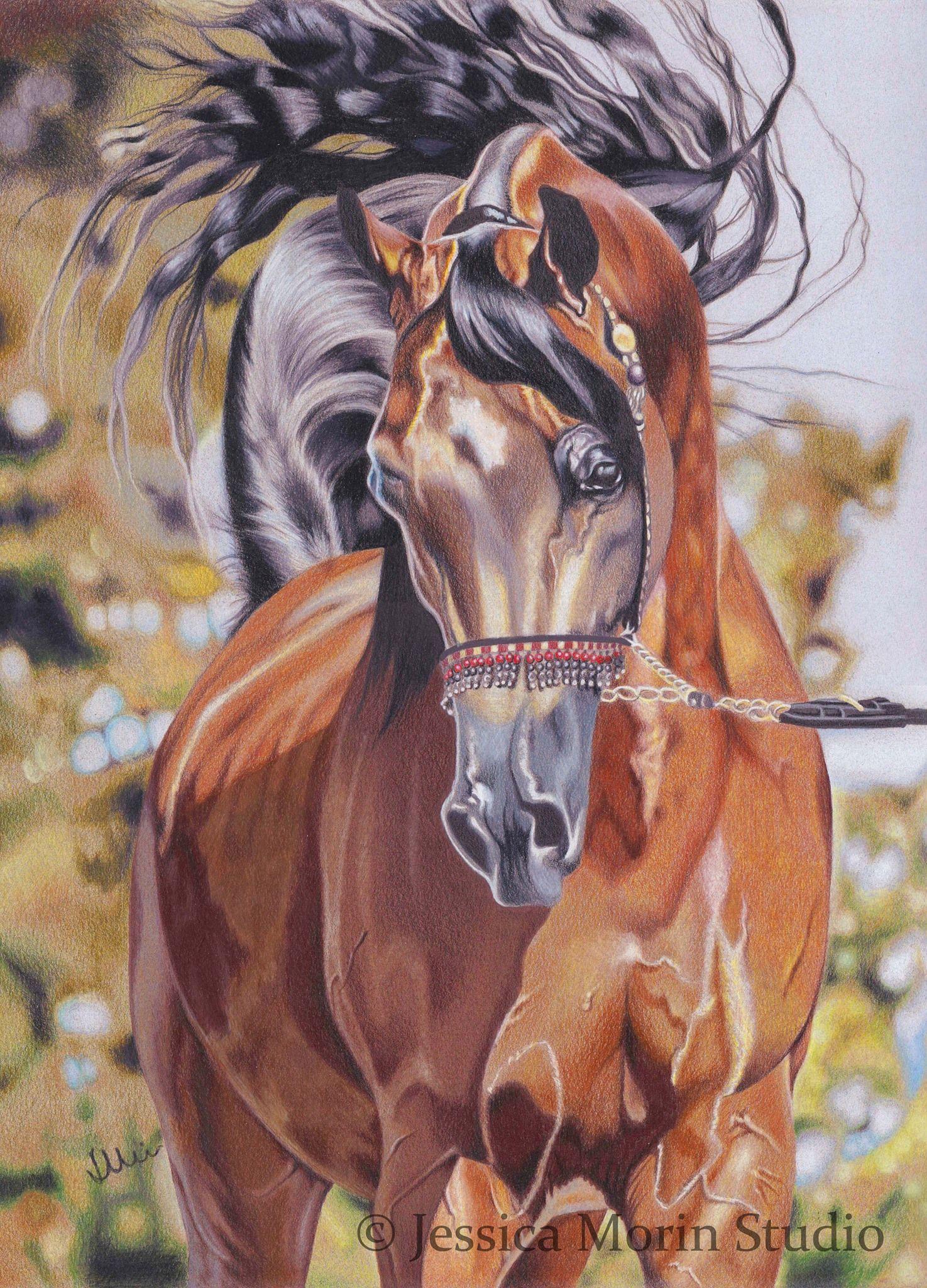 Horse Drawing Colored Pencil Jessica Morin Equine Artwork Arabian Horse Art Horse Drawings