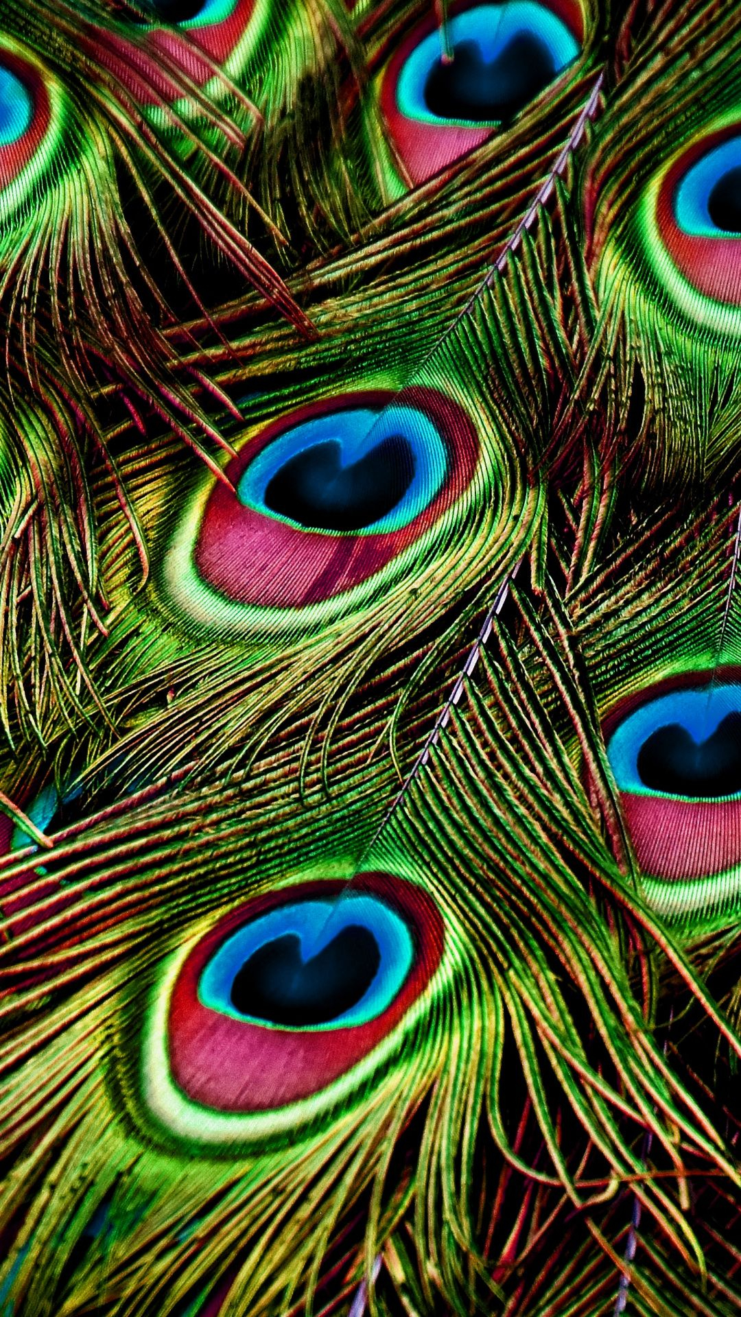 Peacock Feathers Close Up Colorful Wallpaper Feather Wallpaper Peacock Wallpaper Feather Wallpaper Iphone