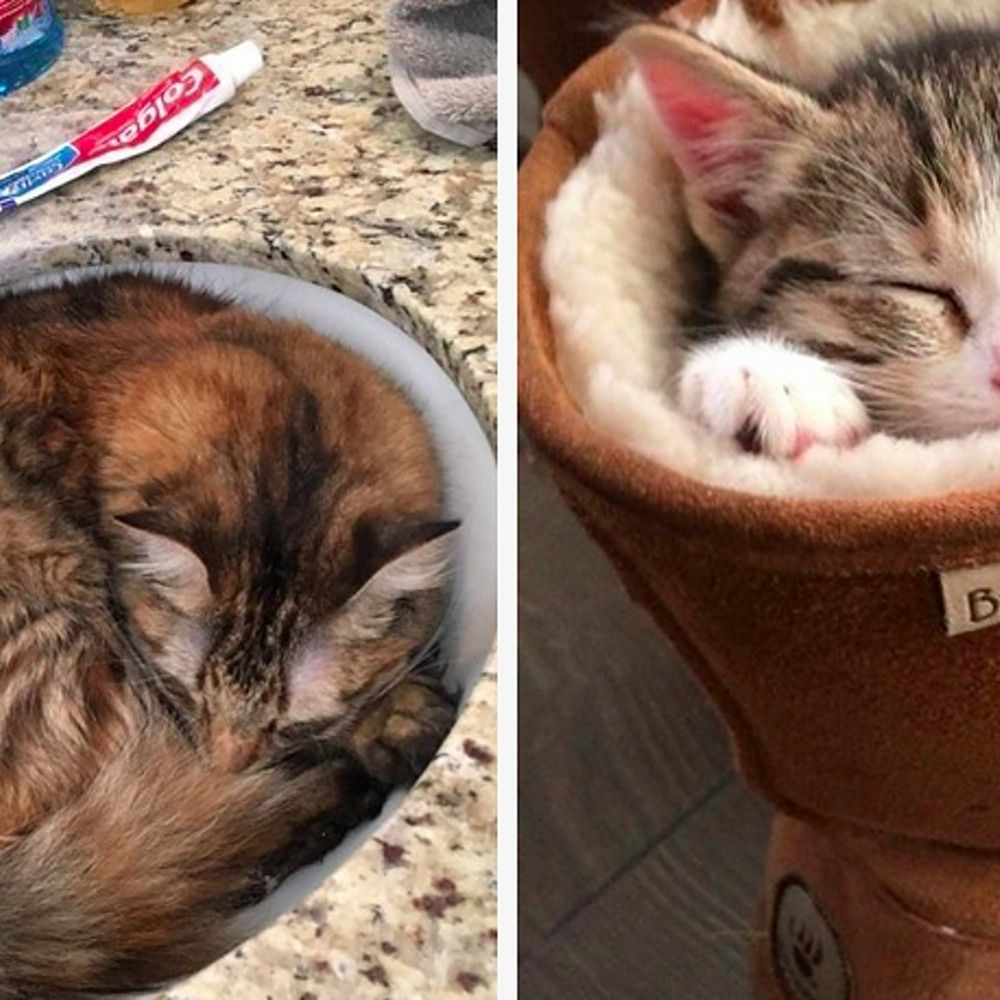 28 Times Cats Proved They Could Sleep Literally Anywhere
