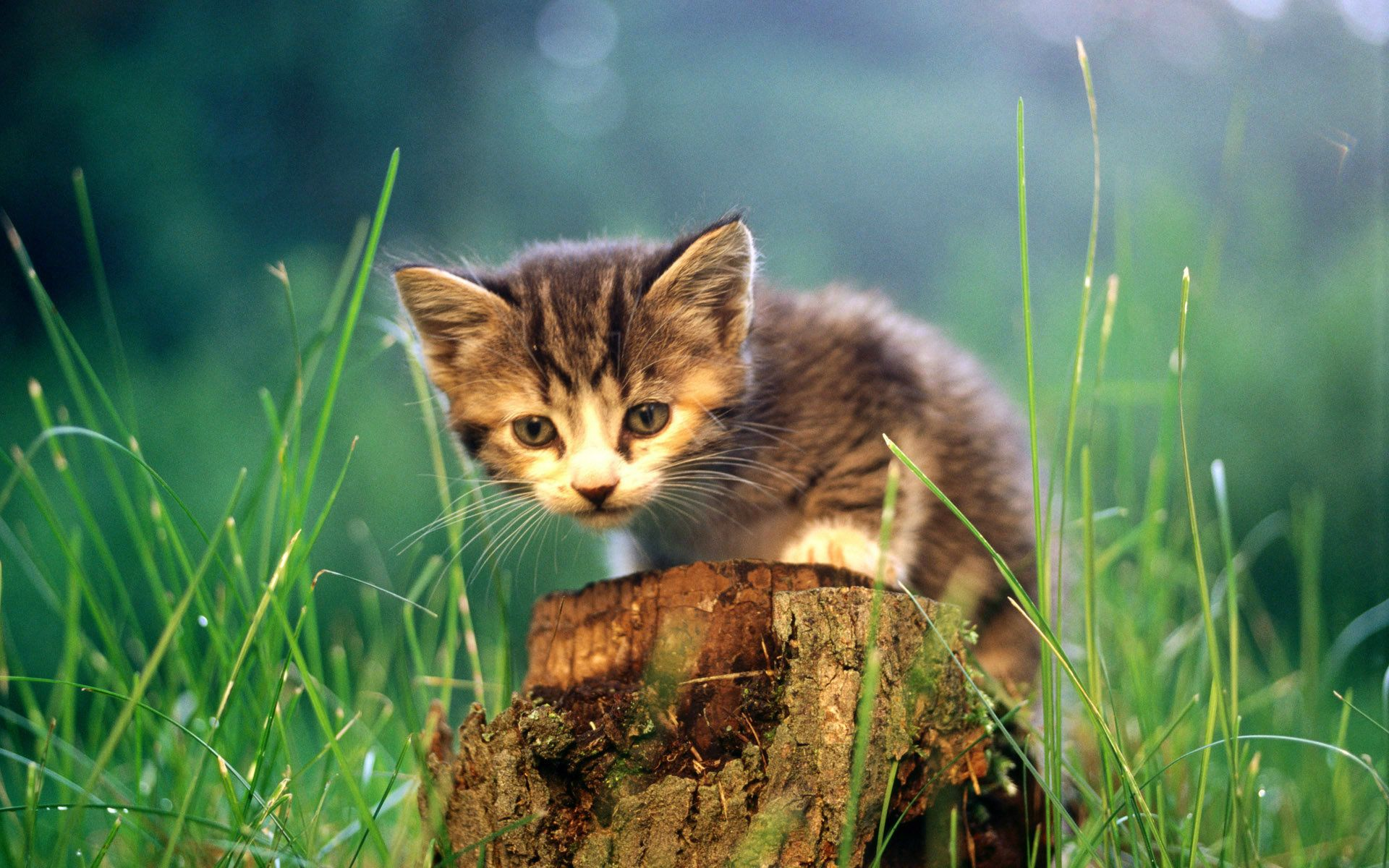 Most Beautiful Cats Wallpapers Hd Photos Images Download Hd