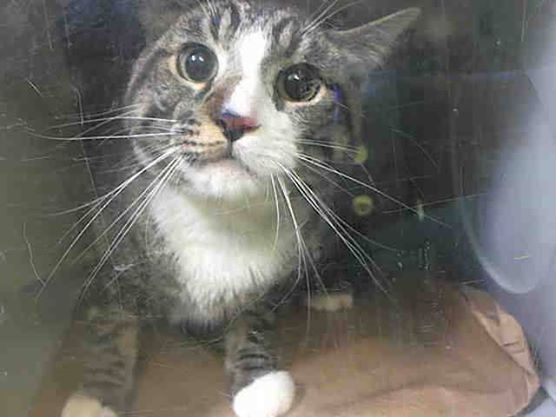 To Be Destroyed 5 7 14 Tony Is A Young Handsome Kitty Who Ended Up At The Shelter When His Previous Owner Had To Move Now He Needs A New Friend To Animales
