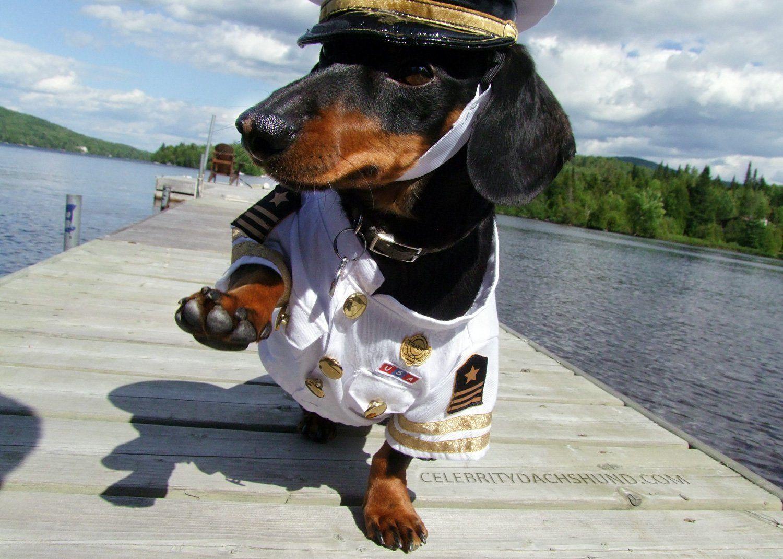 Introducing Captain Crusoe! - Crusoe the Celebrity Dachshund