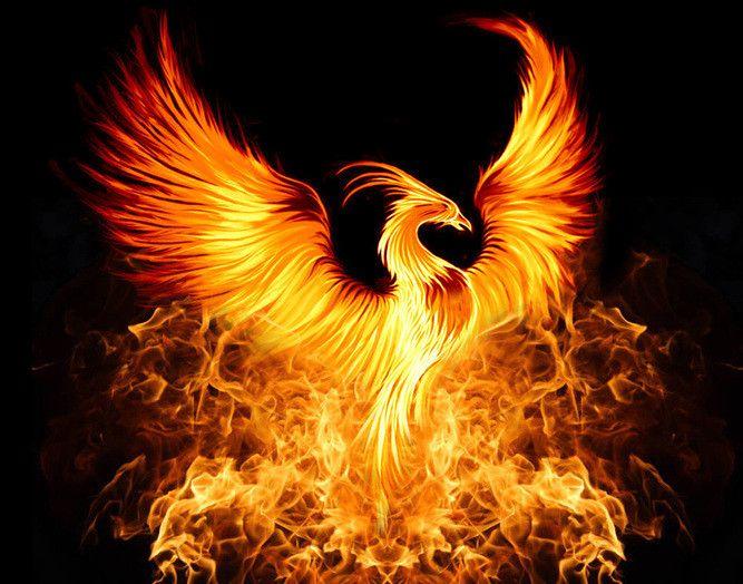 phoenix bird selo l ink co